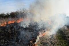 Brennendes trockenes Gras und Schilfe Säubern der Felder und der Abzugsgräben der Dickichte des trockenen Grases Stockfotos