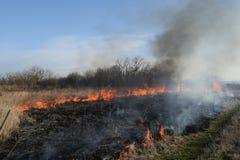 Brennendes trockenes Gras und Schilfe Säubern der Felder und der Abzugsgräben der Dickichte des trockenen Grases Stockfotografie