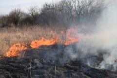 Brennendes trockenes Gras und Schilfe Säubern der Felder und der Abzugsgräben der Dickichte des trockenen Grases Stockbilder