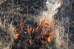 Brennendes trockenes Gras und Schilfe Säubern der Felder und der Abzugsgräben der Dickichte des trockenen Grases Stockfoto
