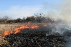 Brennendes trockenes Gras und Schilfe Säubern der Felder und der Abzugsgräben der Dickichte des trockenen Grases Lizenzfreies Stockbild