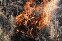 Brennendes trockenes Gras und Schilfe Säubern der Felder und der Abzugsgräben der Dickichte des trockenen Grases Lizenzfreie Stockfotografie