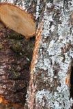 Brennholz 3 Stockfotografie