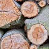 brennholz Lizenzfreies Stockfoto