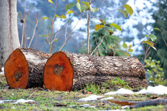 Brennholz auf einem Berghang Stockbilder
