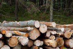 Brennholz-Energiequelle Lizenzfreies Stockfoto