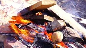 Brennholz, Feuer, das draußen im Feuer brennt stock video