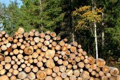 Brennholz gestapelt im Herbst-Wald Lizenzfreie Stockfotografie