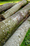 Brennholz, Holz, Holz lizenzfreie stockfotografie