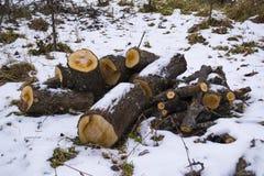 Brennholz im Schnee Stockbild