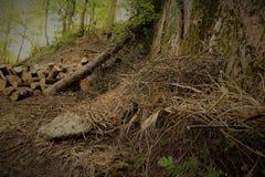 Brennholz im Wald Stockfotografie