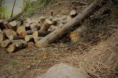 Brennholz im Wald Lizenzfreie Stockfotografie