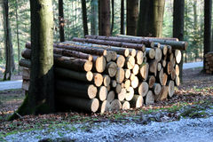 Brennholz im Wald lizenzfreies stockbild