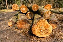 Brennholz im Wald - verbesserndes Energie stockbilder