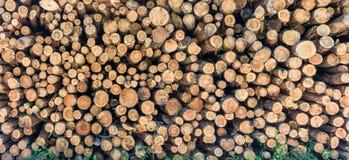 Brennholz wird im Wald für Weiterverarbeitung gespeichert stockfoto