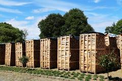 Brennholz, zum des CO2-Problems zu verringern Lizenzfreies Stockbild