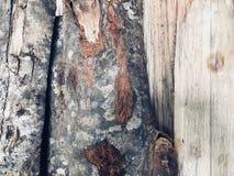 Brennholzoberfläche mit seiner Barke stockbilder