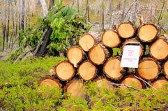 Brennholzvorbereitung lizenzfreie stockfotografie