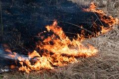 Brennt trockenes Gras stockfotografie