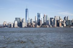 Brent geese on the Hudson River. Brent geese on Ellis island with the Manhattan skyline in the background royalty free stock images
