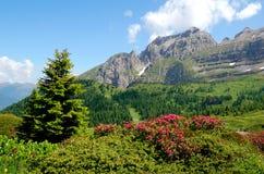 Brenta-Dolomia Italia della montagna Fotografia Stock