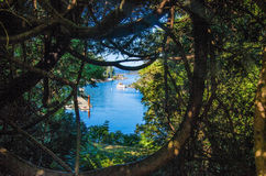 Brentwood Bay framed by contorted trees. Fishing boats docked on Brentwood Bay framed by contorted trees. Near Butchart Gardens on Vancouver Island, British stock photo