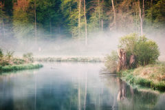 The Brenz river in Eselsburger Tal near Herbrechtingen, Germany. Early morning impression at the Brenz river in the Eselsburger Valley Eselsburger Tal near royalty free stock images