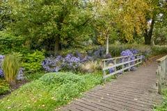 Bressinghamtuinen - ten westen van Diss in Norfolk, Verenigd Engeland - royalty-vrije stock fotografie
