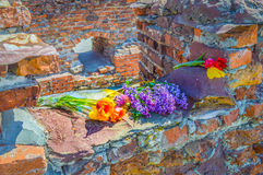 Brest fortress flowers Royalty Free Stock Photos