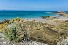 Bretagne-Küste, blauer Ozean, gelbe Blumen stockbild