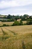 Bretagne-Landschaft Stockfotografie