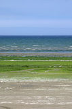 Bretagne plażowy objęło en gr Michel świątobliwej ve wodorostów piasku. Zdjęcia Royalty Free