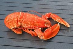 Bretończyk gotujący homar zdjęcie royalty free