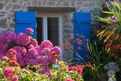 Breton stenstuga med rosa Hortensia Royaltyfri Bild