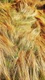 Brett öppet solljus för äng för vårlandsgräs Royaltyfria Bilder