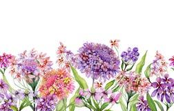 Brett baner för färgrik sommar Den härliga livliga iberisen blommar med gröna sidor på vit bakgrund Horisontalmall stock illustrationer