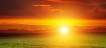 Brett landskap av soluppgång över grönt vetefält Fotografering för Bildbyråer