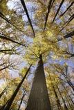 Brett vinkelfoto av träd i höst Royaltyfria Foton