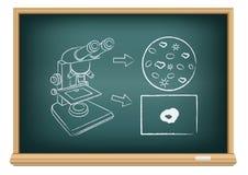 Brettblut unter einem Mikroskop Stockfoto