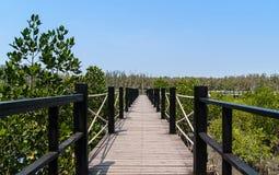 Bretterboden in den Mangrovenwald Lizenzfreie Stockbilder