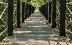 Bretterboden in den Mangrovenwald Stockbild