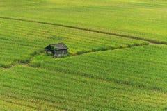 Bretterbude auf dem Maisgebiet Stockfotos