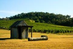 Bretterbude in einem Weinberg Stockfoto