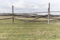 Bretterzaun auf Wiese, in der Kühe weiden lassen Lizenzfreie Stockfotografie