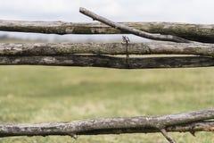 Bretterzaun auf Wiese, in der Kühe weiden lassen Stockbild