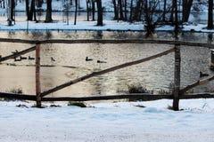 Bretterzaun im Park durch den See mit Enten am Abend im Winter Lizenzfreie Stockbilder