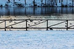Bretterzaun im Park durch den See mit Enten am Abend im Winter Lizenzfreies Stockfoto
