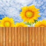 Bretterzaun mit Sonnenblumen lizenzfreie abbildung