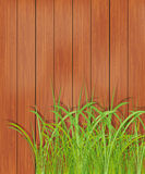 Bretterzaun und grünes Gras. Frühlingshintergrund. Stockfotografie