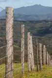 Bretterzaunpfosten an Coromandel-Halbinsel Stockfotos